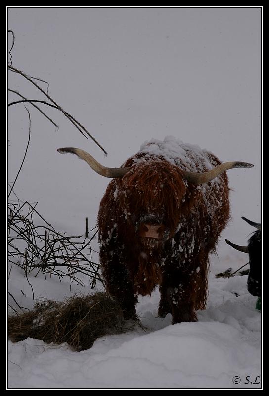 il a enfin neigé sur le hautacam ! Highland-sarah07G