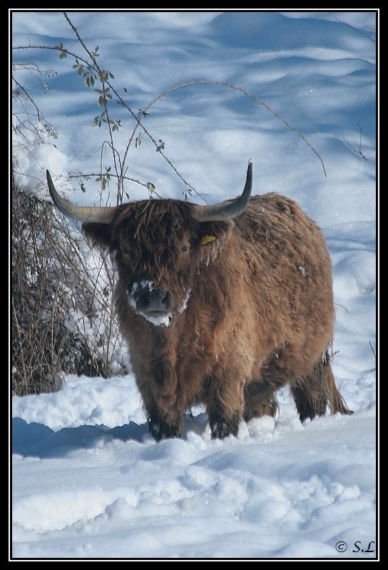 il a enfin neigé sur le hautacam ! Highland-brume11G