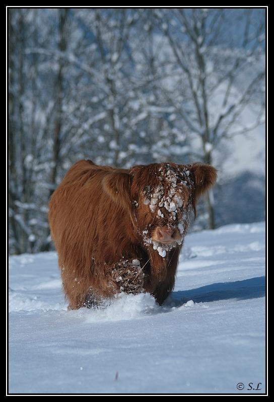 il a enfin neigé sur le hautacam ! Highland-gaia12G