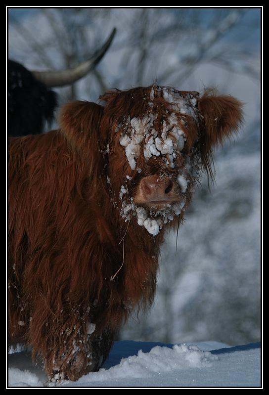 il a enfin neigé sur le hautacam ! Highland-gaia14G