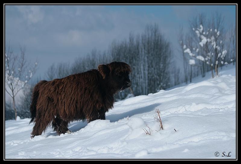 il a enfin neigé sur le hautacam ! Highland-galice8G