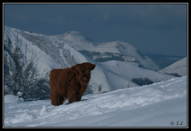 il a enfin neigé sur le hautacam ! Highland-glasgow7G