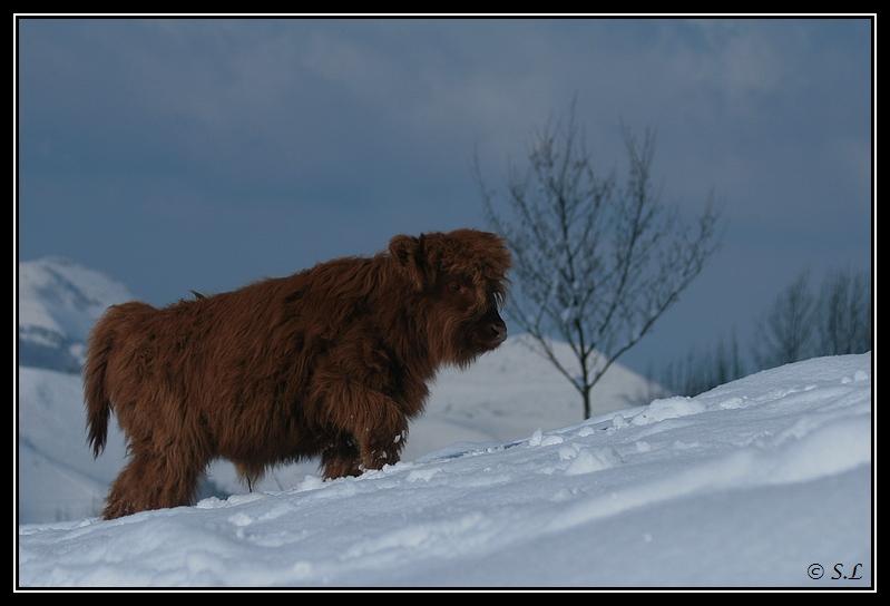 il a enfin neigé sur le hautacam ! Highland-glasgow9G