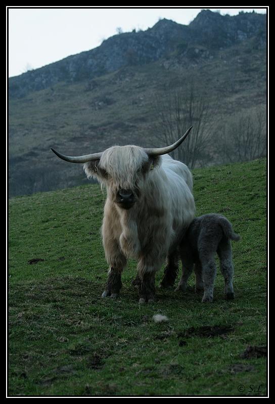 Highland 2012 sur la ferme du Hunt-Cam Highland-harn4G