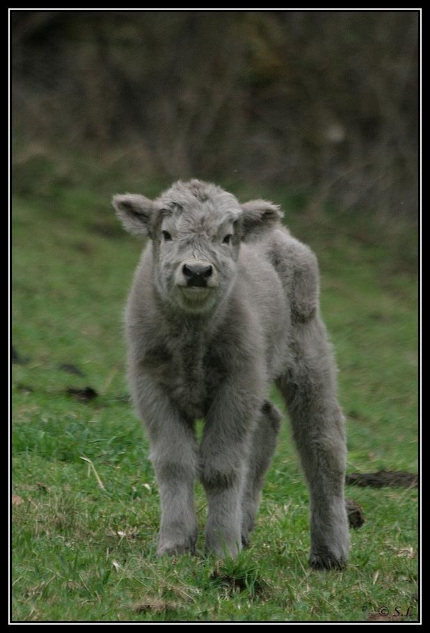 Highland 2012 sur la ferme du Hunt-Cam Highland-harn7G