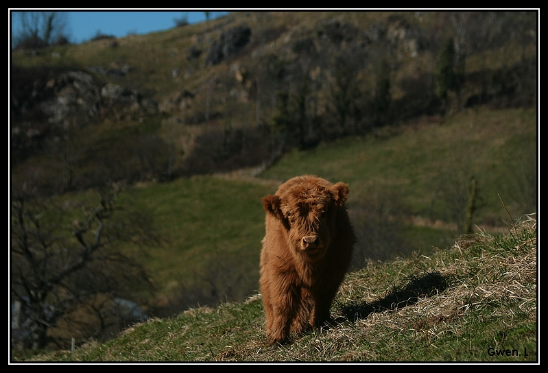 Highland 2012 sur la ferme du Hunt-Cam Highland-harriet12G