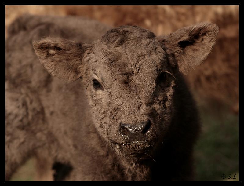 Highland 2012 sur la ferme du Hunt-Cam Highland-helora14G