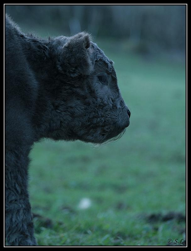 Highland 2012 sur la ferme du Hunt-Cam Highland-helora5G