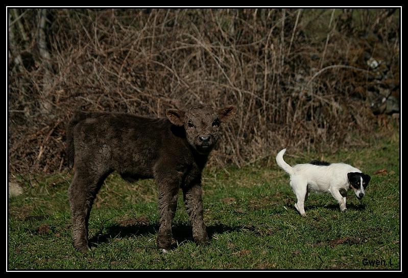 Highland 2012 sur la ferme du Hunt-Cam Highland-helora8G